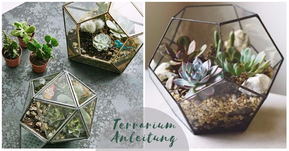 anleitung f r euer eigenes schickes diy mini terrarium. Black Bedroom Furniture Sets. Home Design Ideas