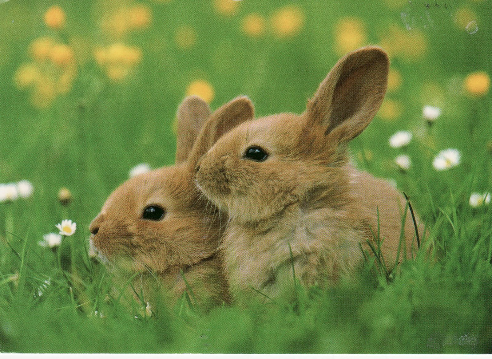 Kunterbuntes Sextreffen zu Ostern
